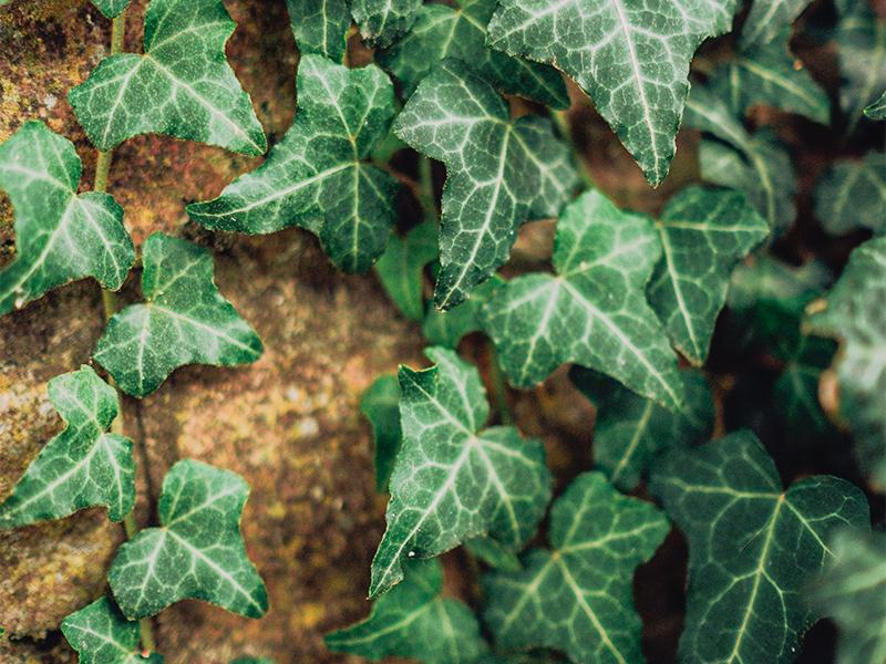 plant blog post