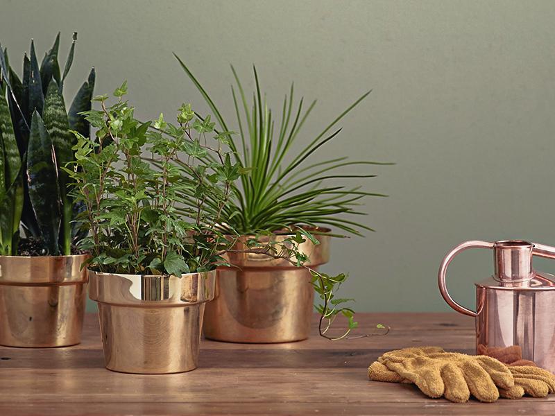 Notre guide facile des plantes antistress