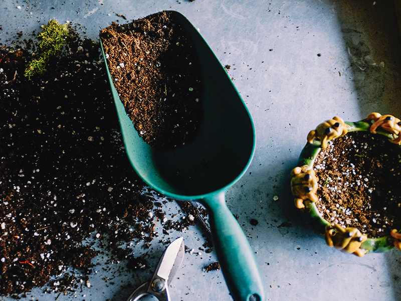 jardinage gardening blog