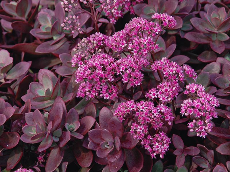 plants plantes blog post
