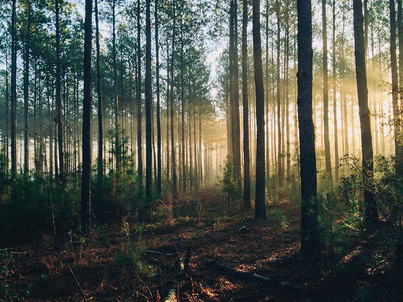 Qu'est-ce qu'un bain de forêt?